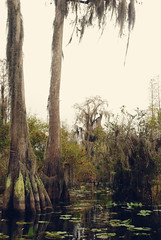 Swamp (moke076) Tags: park autumn black tree fall nature water georgia moss flora wildlife south spooky spanish lilies swamp okefenokee cypress refuge buttresses stephencfoster
