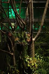 Daniel Stowe Botanical Garden (svbegun) Tags: plants botanicalgarden sigma50mmf28exdgmacro danielstowe sigma50mmf28 belmontnc slta37 sonyslta37