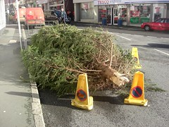 Bovey Tracey Broken Christmas Tree (Bridgemarker Tim) Tags: trees norway gales storms winds spruce boveytracey