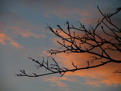 january dawn (rospix) Tags: uk pink blue sky cloud tree nature silhouette wales clouds dawn branch january 2014 rospix