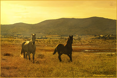 Cavalli............ (leon.calmo) Tags: parco canon cavalli maremma leoncalmo eos50s