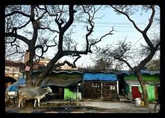 India印度——2013手机摄影PhonePhotography