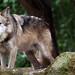 The Big Bad Wolf _1027
