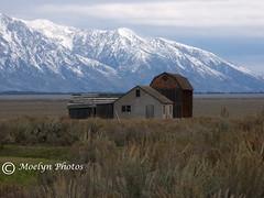 Mormon Row (95) (moelynphotos) Tags: wyoming mountmoran grandteton jacksonhole historichomes mormonrow moelynphotos