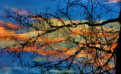 A Tree in The Water (Kenny Shackleford) Tags: sunset sky reflection tree water clouds alabama montgomery