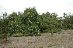 110507_2361.jpg (Weeding Wild Suburbia) Tags: park gardens publicgardens spnp