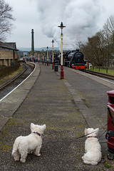 Double header (Mister Oy) Tags: davegreen oyphotos ©oyphotos train black5 dogs eastlancsrailway elr steam steamtrain