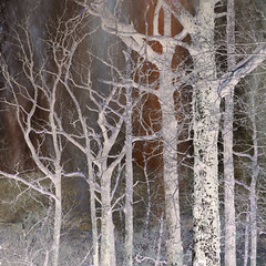 Hodge Close Woods (Ali's view) Tags: trees layers invert colour woods hodgeclose slate multipleexposure lakedistrict