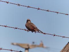 birds argentina