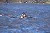ABS_0066 (TonyD800) Tags: steveneczypor regatta crew harritoncrew copperriver rowing cooperriver