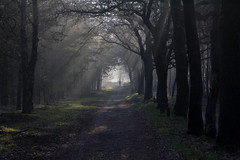Sunday morning run (Theo Bauhuis) Tags: bos veluwe nevel runner running hardloper sunray sun fog