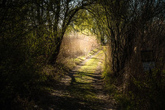 What if... (marco soraperra) Tags: nikon nikkor wood forest path light sun sunlight shadow spring landscape nature tree trees reed