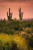 20170409-DSC_5286-Edit (lilnjn) Tags: arizona southwestunitedstates travel unitedstates whitetank