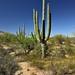 Views Taken While Walking in Saguaro National Park