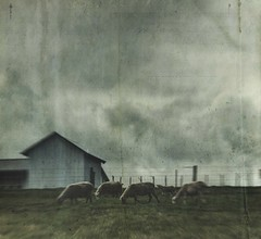 what was that (jssteak) Tags: canon t1i ohio rural sheep amish farm barn storm clouds vintage textured