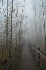 misty walk (PhotonPirate) Tags: boardwalk walking trail