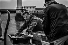 Transport vers la Criée (vedebe) Tags: noiretblanc netb nb bw monochrome pêche pêcheur people humain bretagne port ports ocean docks quai rue urbain ville travail bateaux