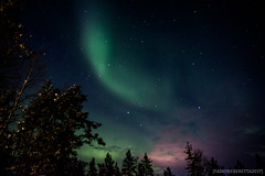 IMG_2944 (F@bione©) Tags: lapponia lapland marzo 2017 husky aurora boreale northenlight circolo polare artico rovagnemi finalndia finland