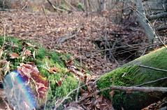 Corner flare! (elkarrde) Tags: autoreflext2 vivitarseries1vmc3585mm128 40mm kodakgold400 kodak kodakgold 400asa iso400 colornegative c41 film film:brand=kodak film:name=kodakgold400 film:speed=400 film:process=c41 film:aspect=32 developer:name=c41 croatia lateautumn december konica konicaautoreflext2 vivitar vivitarseries1 jastrebarsko nature landscape flare leaves forest