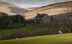 1920p 72dpi-7078 (reach.richardgibbens) Tags: bowland lancashire england uk littledale fell moorland moor valley dale