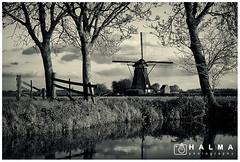 Kinderdijk (windmills, rowing boats and more) Tags: halma landschap landscape kinderdijk molenwaard alblasserwaard molens windmills