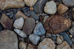 Mechanical Weathering, Part 2. (koperajoe) Tags: northquabbin granite westernmassachusetts geology pebbles cobbles quabbin weathering newengland rocks