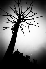 (1/21) Project ''Lviv overhead'' (nerapavlo) Tags: львівзадершиголову lvivoverhead lviv lwow lemberg lvov leopolis ukraine львів україна bnw monochrom noir film filmphotography analog analogphotography 35mm 35mmfilm kodak project