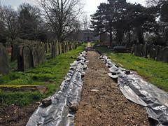 path renovation (Johnson Cameraface) Tags: 2017 march spring olympus omde1 em1 micro43 mzuiko 1240mm f28 johnsoncameraface yorkcemetery york yorkshire cemetery graves tomb headstone green nature wildlife