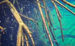 Tulum Casa Cenote blue-5