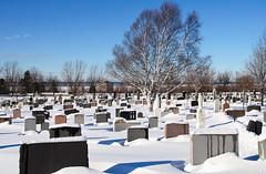 Cimetière sous la neige à Rimouski. (Gaetan L) Tags: baslaurent gaspésie rimouski nikond7000 route132 provincedequébec fleuvestlaurent cimetière cemetery rimouskicemetery cimetièrederimouski hiver winter neige snow