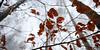 rotbuchenwald im nebel 0650 (s.alt) Tags: treesinfog copperbeech beechtree beech rotbuche rötlichefärbung rot rote blätterbuchenwaldherbstverfärbungbeautifulwide angle wide rotbuchenwald nebel fog roteblätter buchenwald beautiful ast äste astwerk geäst zweige natur feucht struktur nature natureunveiled winter silhouette tree baum structure texture detail branch kalt morgen bäume winterforest europa bayern laubbaum buche fagus silence plant