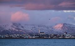 Pink clouds and a copter (katrin glaesmann) Tags: island iceland unterwegsmiticelandtours photographyholidaywithicelandtours skyline reykjavík winter mountains snow sunset helicopter hallgrímskirkja