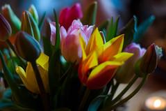 Happy Easter! (Maxi Winter) Tags: tulips tulpen bouquet bunchofflowers blumenstraus kerzenlicht kerze bougie candlelight candle tealight kitchen küche cuisine fleurs tulipe lowkey