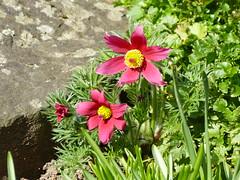 2017 Germany // Unser Garten - Our garden // im April (maerzbecher-Deutschland zu Fuss) Tags: 2017 garten natur deutschland germany maerzbecher garden unsergarten april
