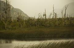 Ciénaga de los muertos (miguelmondaca) Tags: ciénaga de los muertos tolkien dead marshes patagonia chile aysén