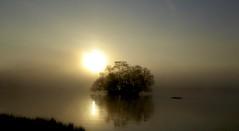 P1030967 (Sula Riedlinger) Tags: sunrise sunriseinrichmondpark mistysunrise mist royalparks royalpark richmondpark greaterlondon londonroyalparks london urbannature surrey landscape uklandscape