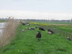 IMG_8396 (kassandrus) Tags: hiking wandelen netherlands nederland struinenenvorsen oude hollandse waterlinie