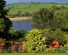 The garden:  historical shot from front garden (ronmcbride66) Tags: garden lake drumlin conifers azalea landscape countydown shrubs basketofeggs glacialdeposits reeds reflections pasture hedgerows hawthorn rhododendron interdrumlinlake dairylough thuja