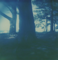 (ludwigwest) Tags: polaroid 600 theimpossibleproject instantfilm filter