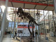 tyrannosaurus 14