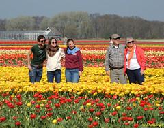 Pret met tulpen (Shahrazad26) Tags: bollenvelden tulips nederland holland thenetherlands paysbas zuidholland colors couleurs colours kleuren farben