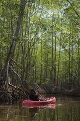 Mangroves - Parque Nacional Marino Ballena, Uvita, Puntarenas, CR (Di Gonzalez) Tags: nature naturephotography naturaleza kayak kayaking costarica soycostarica nikon nikonphotography nikond3200
