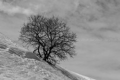 Campo Felice (Irek.) Tags: nature landscape snow italy photography