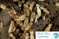 termite-control-acompany (goda_clean33) Tags: شركة مكافحة النمل الابيض بالرياض،مكافحة بالرياض،القضاء على الابيض،النمل الابيض،شركة بجازان،شركة بسكاكا،مكافحة بوادى الدواسر،مكافحة بالجوف،شركة بنجران،شركة بالقصيم