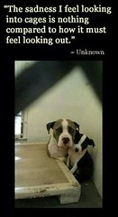 LOOKING OUT CAGE (dflmanagement) Tags: dog adopt rescue animal pet breeder cat