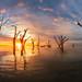 Bonney sunrise (Dylan Toh) Tags: barmera filter lakebonney nisi australia australian dawn dylantoh everlook landscape longexposure morning photographer photography southaustralia