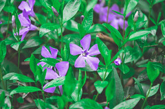 (Alessier) Tags: nikon d5100 spring flowers green nature