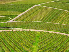 Vineyard Patterns (Batikart) Tags: road plants flower nature field grass leaves lines stairs canon germany way landscape geotagged deutschland leaf
