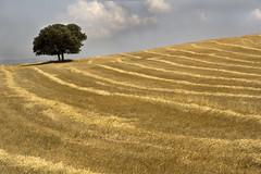 IMG_2211 Landscape country La Toscana,Andalusia,Spain (jaro-es) Tags: espaa tree canon landscape spain image landschaft baum spanien spanelsko eos450 bestcapturesaoi elitegalleryaoi mygearandme mygearandmepremium mygearandmebronze mygearandmesilver mygearandmegold mygearandmeplatinum flickrbronzetrophygroup treesecl infinitexposure