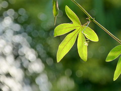 P1030559 (*LINNY *) Tags: garden